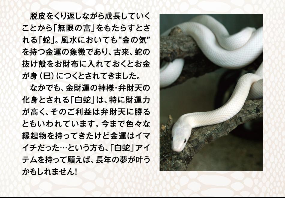 """脱皮をくり返しながら成長していくことから「無限の富」をもたらすとされる「蛇」。風水においても""""金の気""""を持つ金運の象徴であり、古来、蛇の抜け殻をお財布に入れておくとお金が身(巳)につくとされてきました。"""